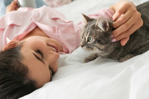 人とくつろぐ猫