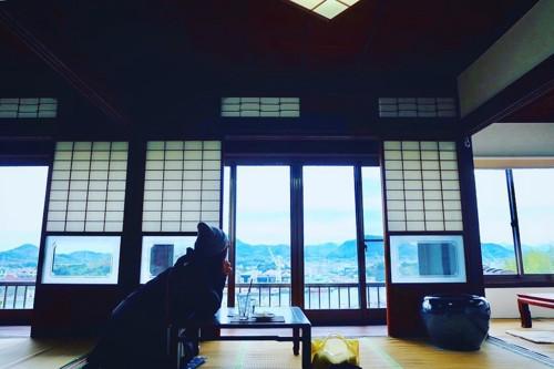 空猫カフェ店内