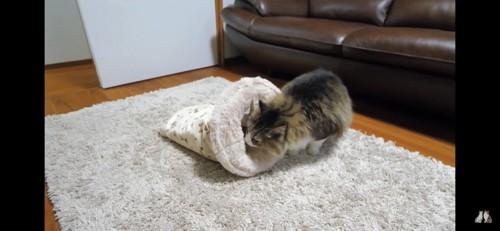 クッションを覗き込む猫