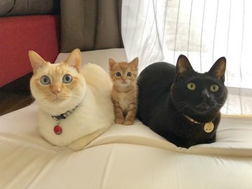 家族写真のように並んでおすまししている3匹の猫