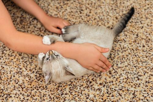 人の腕を甘噛みする猫