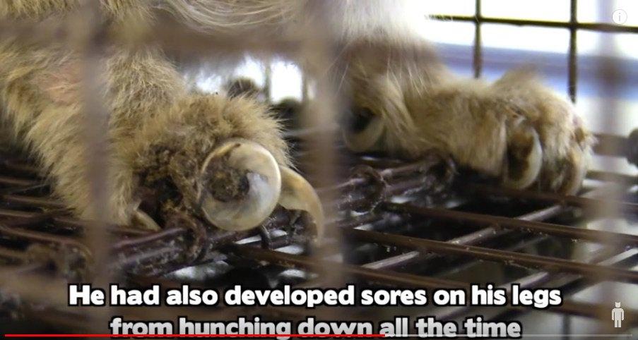 伸びすぎた猫の爪