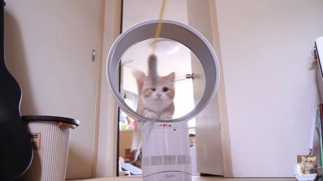 猫の顔正面(正面から撮影)