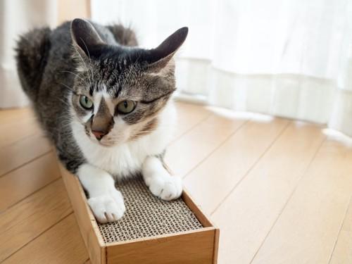 床に置いてある爪研ぎに乗る猫