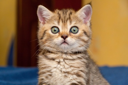 真剣な表情で見つめる子猫
