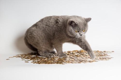 たくさんのコインの上にいる猫