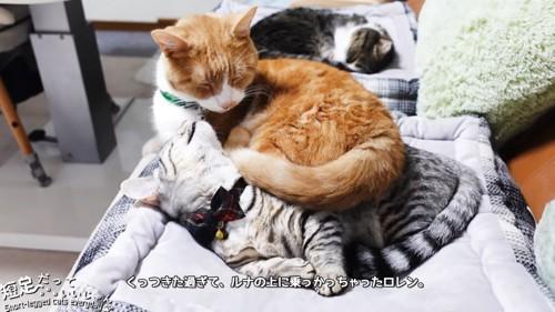 子猫の上に乗る茶色の猫