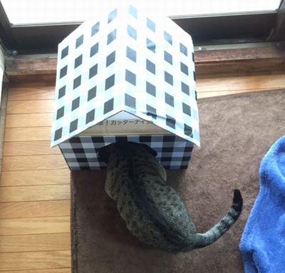 猫が入り口に顔を入れてのぞき込んでいる