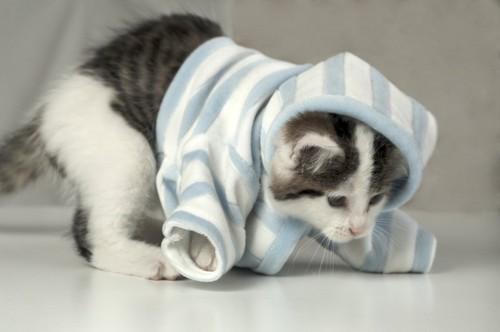 服が脱げかかってる子猫