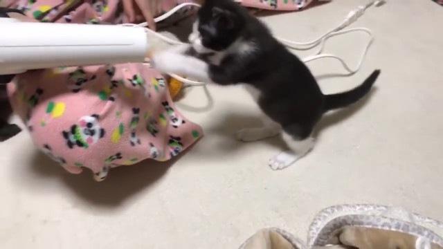 ドライヤーに攻撃する猫