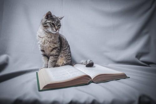 本を広げて見る猫