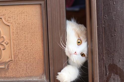 ドアを開ける猫