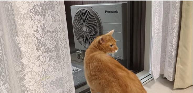 窓際の茶とら猫