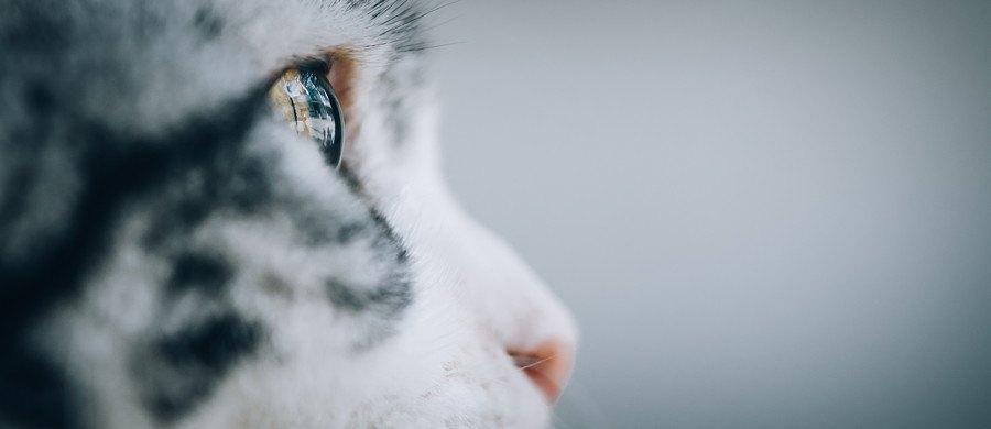 猫のドアップな横顔