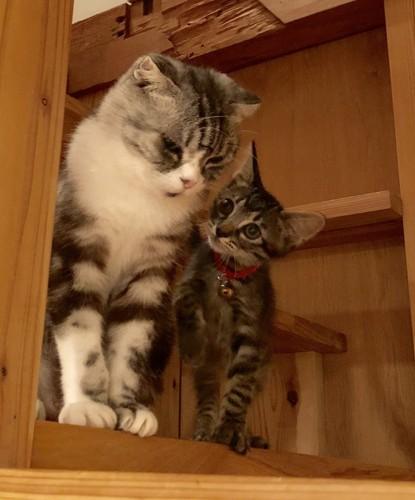 オババニャンと子猫時代の子ニャンコ