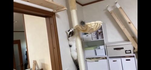 キャットタワーを登る猫