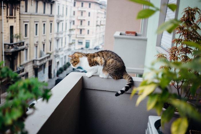 ベランダから下を覗く猫