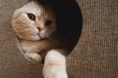 猫ハウスの中の猫