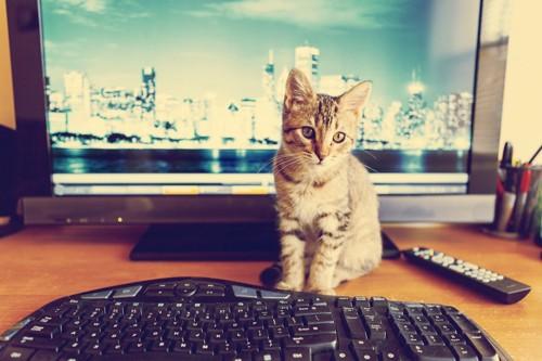 パソコンの前に居る猫