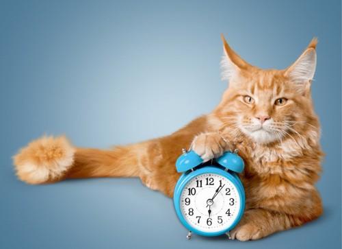 時間がかかると主張する猫