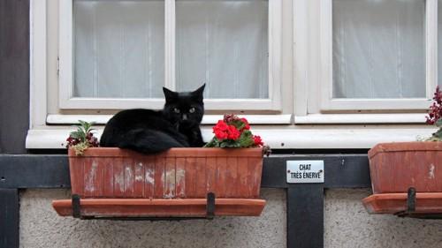 花壇に座る猫