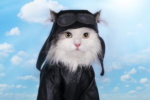 ライダースを着た猫