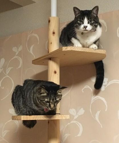 猫のあるある行動:鞠に見える