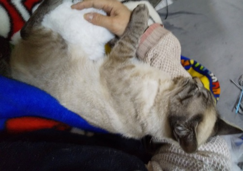 腕に抱かれて眠るシャルル