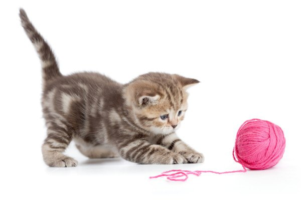 ピンクの毛糸で遊ぶ子猫