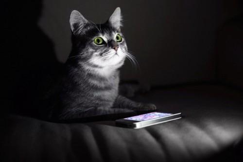 暗闇でスマホの光の中見上げる猫