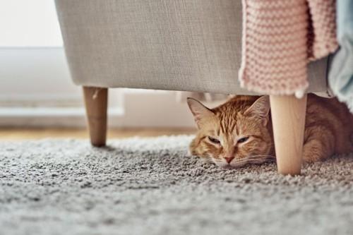 ソファの下でうずくまる猫