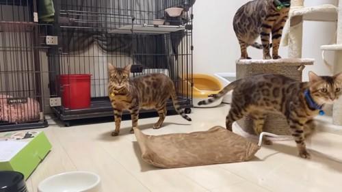 ペット用ホットカーペットと周りにいる猫たち