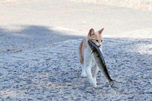 魚をくわえたどら猫