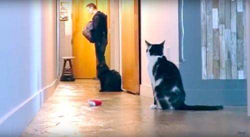 飼い主様を見送る猫