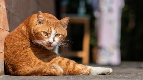 柄のついた猫