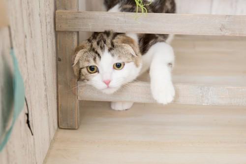 飼い主の後をついていく猫