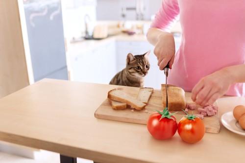 キッチンで料理をする人を見る猫