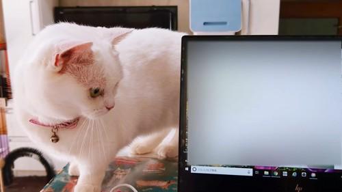 キーボードを見つめる猫
