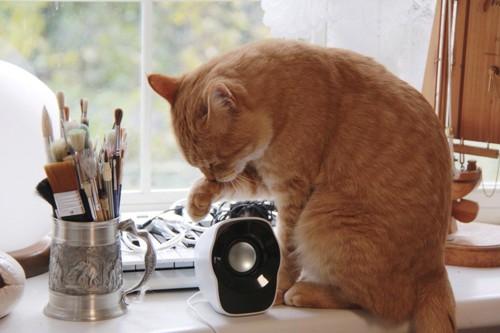 物を触っている猫