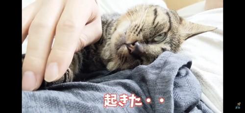 少し起きる猫