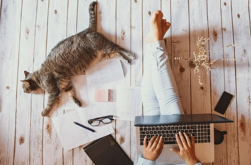 パソコンを打つ人と猫