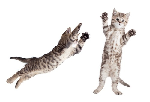 立ち上がる猫とジャンプする猫