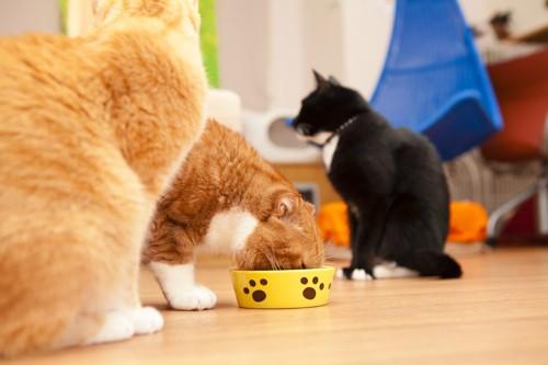 食事をする猫と座る猫