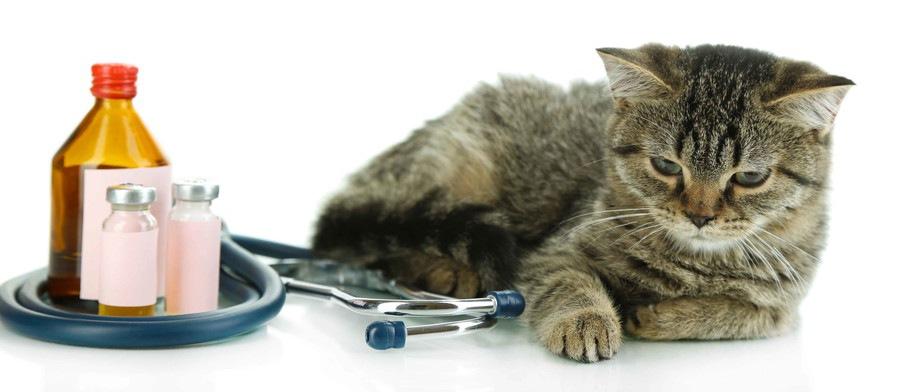 薬の瓶と猫