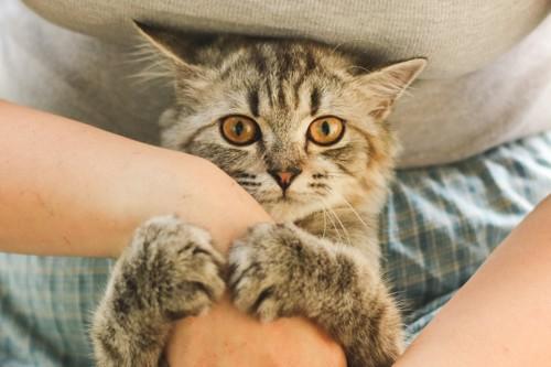 人の手にしがみつく猫