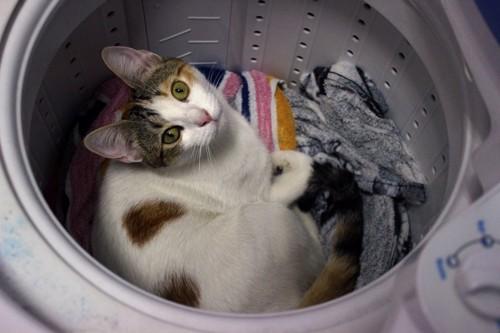 洗濯機の中から見上げる猫