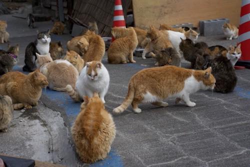 集会中の猫たち
