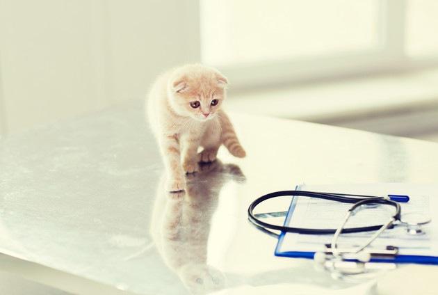 病院の子猫