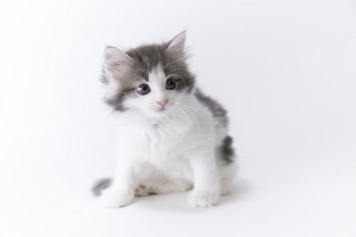 座って横を見る子猫