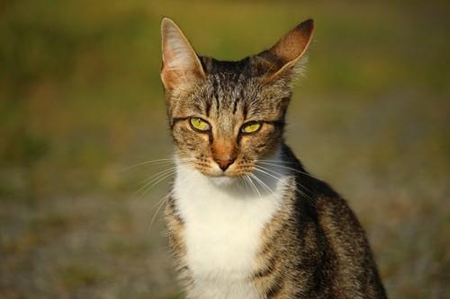 猫の耳をあちこち動かしている